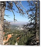 Bryce Canyon Overlook With Dead Trees Acrylic Print