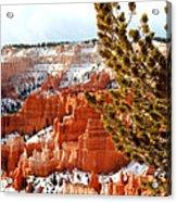 Bryce Canyon Pine Side Acrylic Print