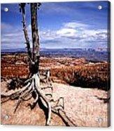 Bryce Canyon State Park Acrylic Print