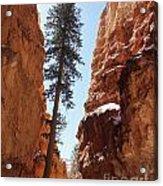 Bryce Canyon Wall Street Acrylic Print