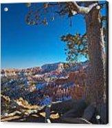 Bryce Pine Acrylic Print