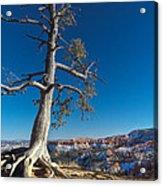 Bryce Tree Acrylic Print