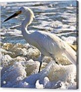 Bubbles Around Snowy Egret Acrylic Print