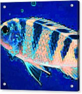 Bubbles - Fish Art By Sharon Cummings Acrylic Print