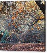 Buck And Fall Foliage Acrylic Print