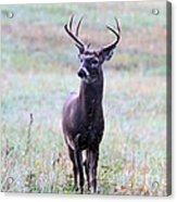 Buck Looking For A Doe Acrylic Print