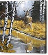 Buck Reflection Acrylic Print