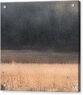 Buck Whitetail Deer Crossing Field Acrylic Print