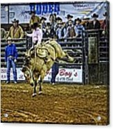Bucked Out Acrylic Print