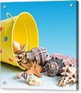 Bucket Of Seashells Still Life Acrylic Print by Tom Mc Nemar