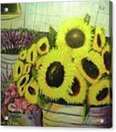 Bucket Of Sunflowers Acrylic Print