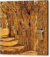 Buckets Of Gold Acrylic Print by Melanie Leo