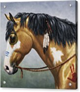 Buckskin Native American War Horse Acrylic Print by Crista Forest