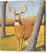 Bucky The Deer Acrylic Print