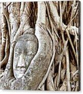 Buddha Head In Tree Wat Mahathat Ayutthaya  Thailand Acrylic Print by Fototrav Print