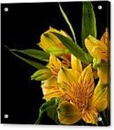 Budding Flowers Acrylic Print