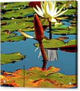 Budding Lilies Acrylic Print