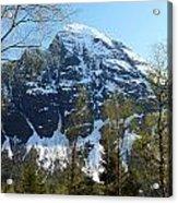 Buds And Glaciers  Acrylic Print