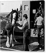 Budweiser Clydesdales Los Vaqueros Rodeo Parade Tucson Arizona 1984 Acrylic Print
