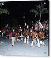 Budwiser Clidsdale Horses Acrylic Print