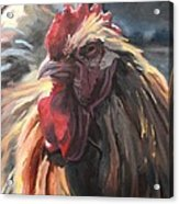 Buff Orpington Cockerel Acrylic Print