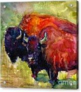Buffalo Bisons Painting Acrylic Print