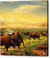 Buffalo Fox Great Plains Western Landscape Oil Painting - Bison - Americana - Historic - Walt Curlee Acrylic Print