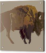 Buffalo. Hand-drawn Illustration Acrylic Print