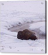 Buffalo In Snow   #6143 Acrylic Print