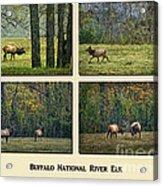 Buffalo National River Elk Acrylic Print