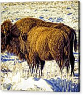 Buffalo Painting Acrylic Print