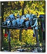 Buffalo Spiritual Grounds Acrylic Print