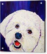 Buffy Acrylic Print by Debi Starr