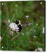 Bug Art 136 Acrylic Print