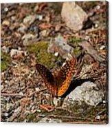 Bug Art114 Acrylic Print