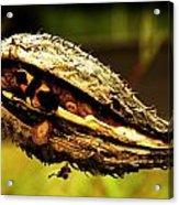 Bug Camo Acrylic Print