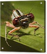 Bug Eyes Acrylic Print