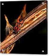 Bug In The Night Acrylic Print