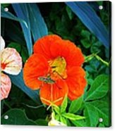 Bug On Flower Acrylic Print by Troy Lewis