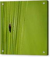 Bug Acrylic Print