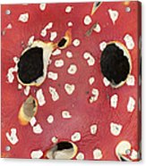 Bugaboo - Amanita Muscaria Acrylic Print