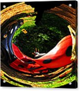 Bugs At The Zoo Lady Bug Acrylic Print
