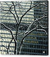 Building Reflection And Tree Acrylic Print