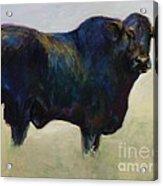 Bull Acrylic Print