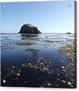Bull Kelp Bay Acrylic Print