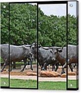 Bull Market Quadriptych Acrylic Print