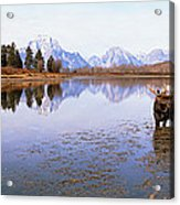 Bull Moose Grand Teton National Park Wy Acrylic Print