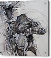 Bull Rider Acrylic Print by Bob Graham