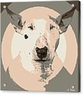 Bull Terrier Graphic 1 Acrylic Print