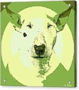 Bull Terrier Graphic 2 Acrylic Print